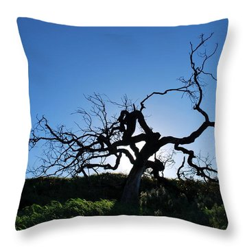 Throw Pillow featuring the photograph Tree Of Light - Straight View by Matt Harang