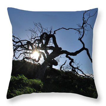 Throw Pillow featuring the photograph Tree Of Light - Sunshine Through Branches by Matt Harang