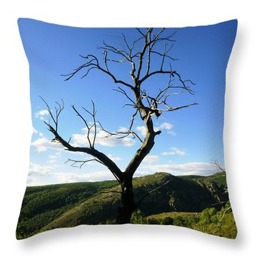 Tree Throw Pillow by Oliver Johnston