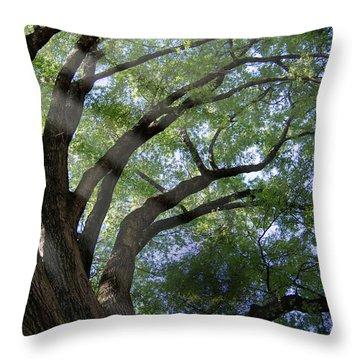 Tree Rays Throw Pillow