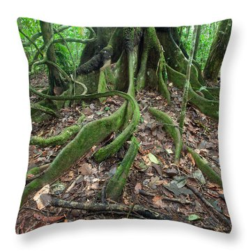 Tree Roots In Chalalan Rainforest Throw Pillow