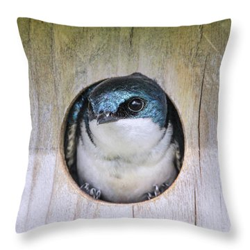 Throw Pillow featuring the photograph Tree Swallow In Nest Box by Jennie Marie Schell
