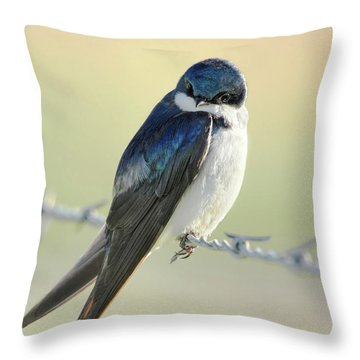 Throw Pillow featuring the photograph Tree Swallow by Jennie Marie Schell