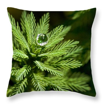 Tree Top Dew Drop Throw Pillow by Christopher Holmes