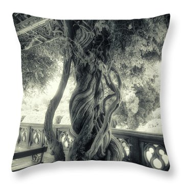 Tree Trunk Bw Series Y6693 Throw Pillow