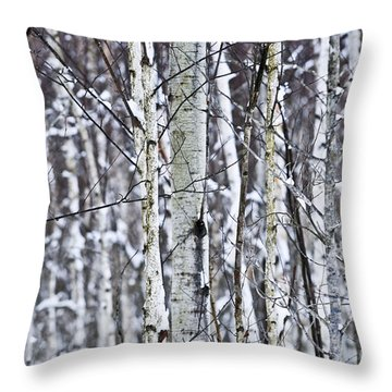 Tree Trunks Covered With Snow In Winter Throw Pillow by Elena Elisseeva
