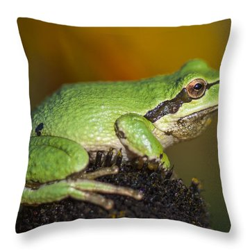 Treefrog On Rudbeckia Throw Pillow