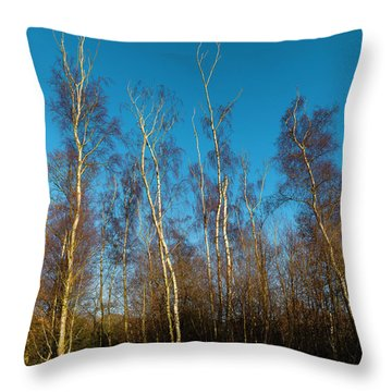 Trees And Blue Sky Throw Pillow