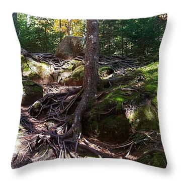 Trees - Mont Tremblant National Park Throw Pillow