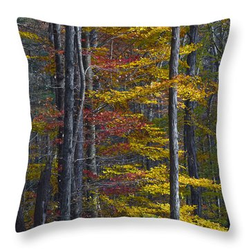 Trees With Autumn Colors 8260c Throw Pillow