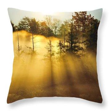 Treetop Shadows Throw Pillow