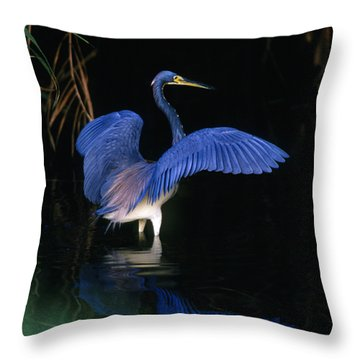 Tri-colored Heron - Fs000031 Throw Pillow