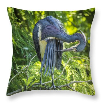 Throw Pillow featuring the photograph Tri-colored Heron Grooming by Paula Porterfield-Izzo