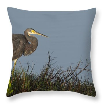 Tri-colored Heron In The Morning Light Throw Pillow
