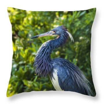 Throw Pillow featuring the photograph Tri-colored Heron Plumage by Paula Porterfield-Izzo