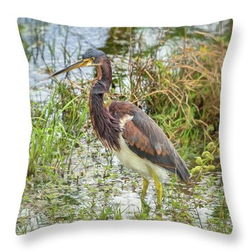 Tri-colored Heron Throw Pillow