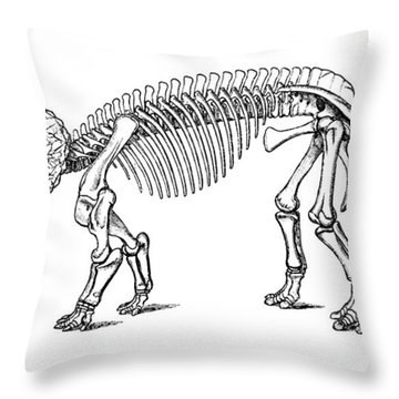 Triceratops Prorsus Throw Pillow by Science Source
