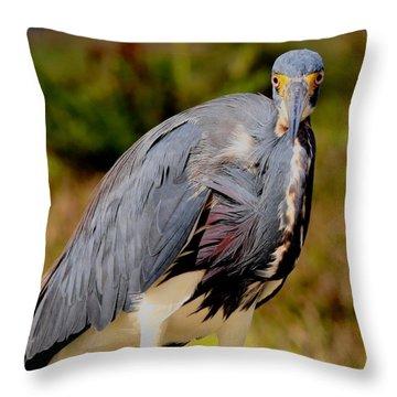 Tricolor Heron Throw Pillow