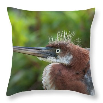 Tricolored Heron - Bad Hair Day Throw Pillow