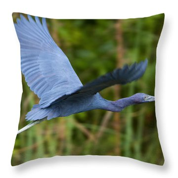 Tricolored Heron Flight Throw Pillow