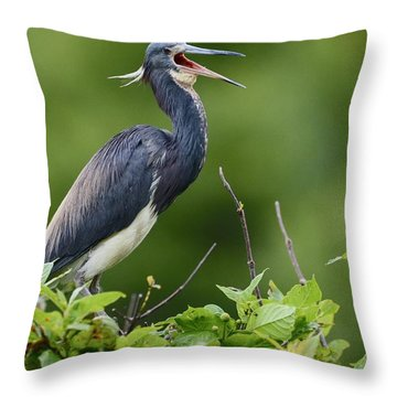 Tricolored Herons Call Throw Pillow by Kathy Gibbons