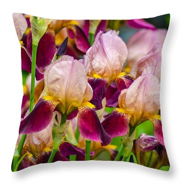 Tricolored Irisses Throw Pillow