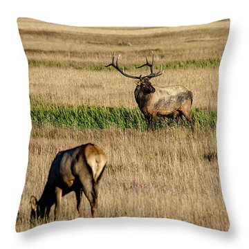 Throw Pillow featuring the photograph Trifecta by Bitter Buffalo Photography