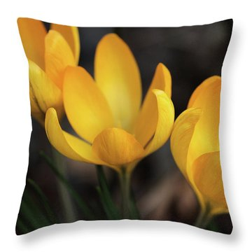 Throw Pillow featuring the photograph Triplets by Connie Handscomb