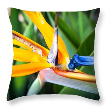 Throw Pillow featuring the photograph Tropical Closeup by T Brian Jones