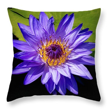 Throw Pillow featuring the photograph Tropical Day Blooming Water Lily In Lavender by Julie Palencia