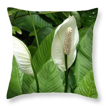 Tropical Flower Throw Pillow by Margaret Brooks