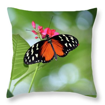 Tropical Hecale Butterfly Throw Pillow