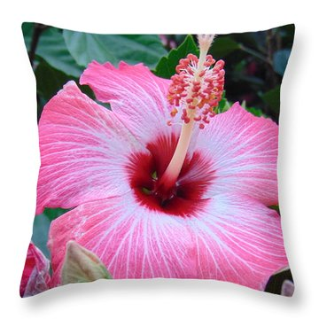 Tropical Hibiscus Throw Pillow by Charlotte Gray