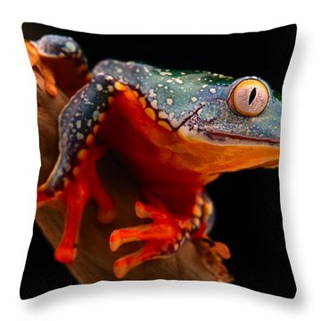 tropical tree frog Cruziohyla craspedotus Throw Pillow by Dirk Ercken