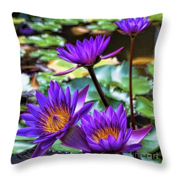 Tropical Water Lilies Throw Pillow by Karen Lewis