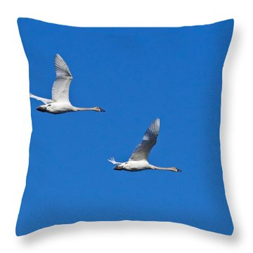 Trumpeter Swan 1727 Throw Pillow by Michael Peychich