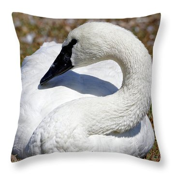 Trumpeter Swan Calming Effect Throw Pillow