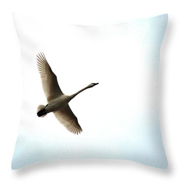 Trumpeter Swan In Flight Throw Pillow