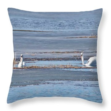Trumpeter Swans 0933 Throw Pillow by Michael Peychich