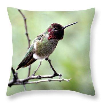 Trumpeting Hummingbird Throw Pillow