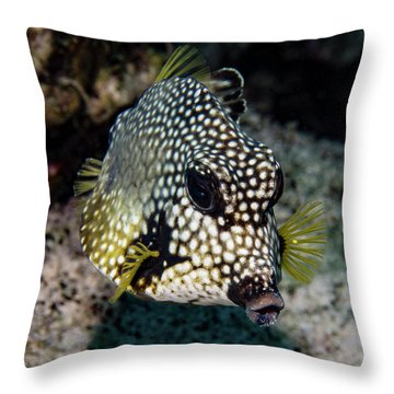 Throw Pillow featuring the photograph Trunkfish Portrait by Jean Noren