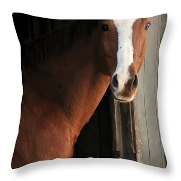 Throw Pillow featuring the photograph T's Window by Angela Rath