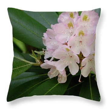 Tucker County Rhododendron Throw Pillow