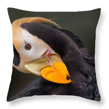 Tufted Puffin Preening Throw Pillow