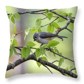 Throw Pillow featuring the photograph Tufted Titmouse by Betty Pauwels