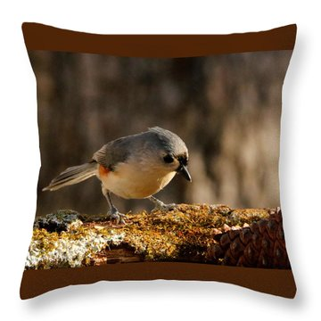 Tufted Titmouse In Fall Throw Pillow by Sheila Brown