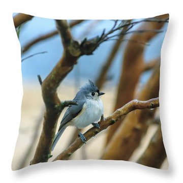 Tufted Titmouse In Tree Throw Pillow