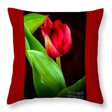 Tulip Caught In The Light Throw Pillow
