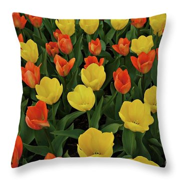 Tulip Chorus Throw Pillow