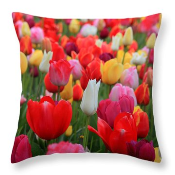 Throw Pillow featuring the photograph Tulip Color Mix by Peter Simmons